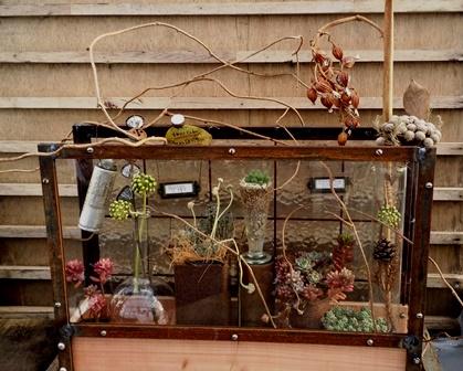 画像1: タニサボ・ハーバリウム【植物標本室】