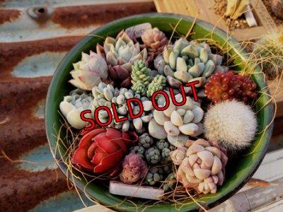 画像2: 小さな植物のセット♡hb-g(3/21)