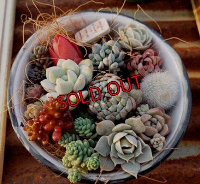 画像1: 小さな植物のセット♡hb-w(3/21)