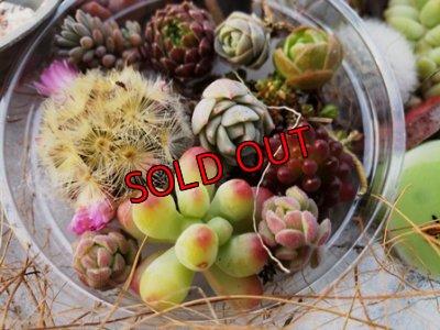 画像2: 小さな植物と小さなパーツのセット♡hp16-h