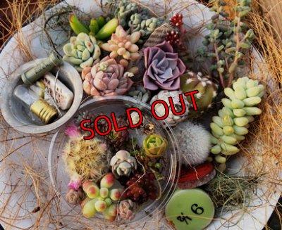 画像1: 小さな植物と小さなパーツのセット♡hp16-h