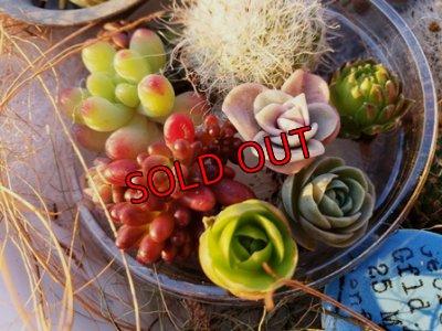 画像2: 小さな植物と小さなパーツのセット♡hp16-y