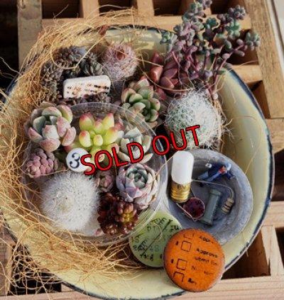 画像1: 小さな植物と小さなパーツのセット♡hp14-y(3/21)