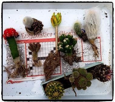 合計11種の植物がセット内容です。