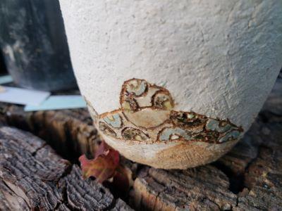 画像3: ゼンタングル鉢〜木の実/3個セット