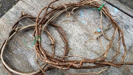 画像2: 福☆自然の小物/蔦